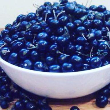 frutti Solanum nigrum